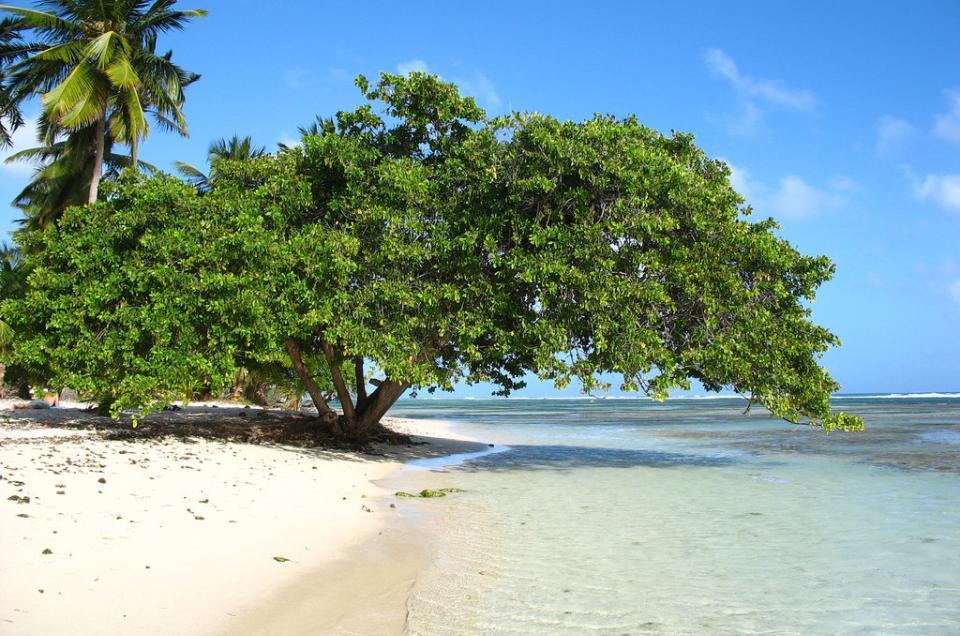 la plage de bois jolan guadeloupe