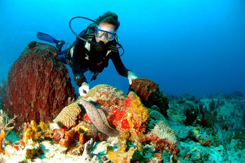 Faire de la plongée sous marine en guadeloupe