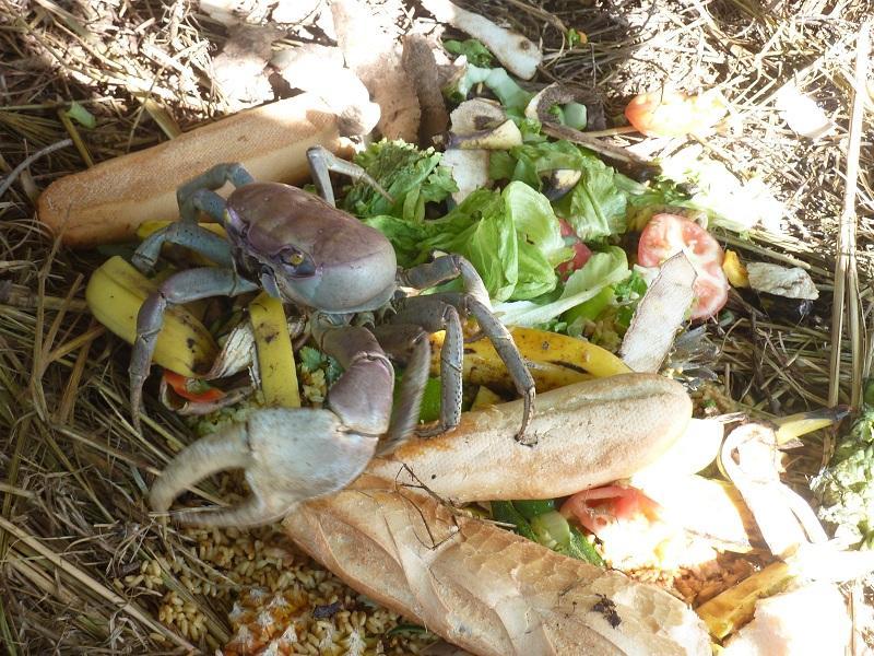 Fête Du Crabe 2017 En Guadeloupe